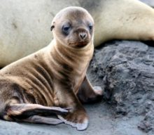 Animal Success Stories Prove Why We Need To Protect The Endangered Species Act