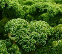 Is Kale Your Friend or Foe?
